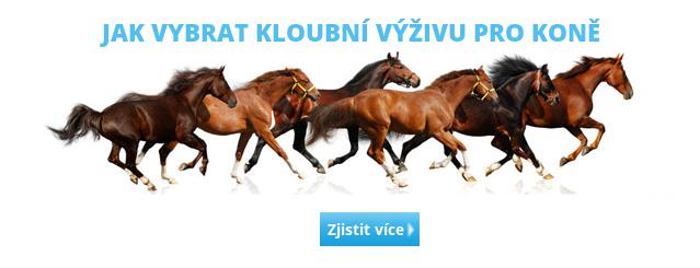 Jak vybrat kloubní výživu pro koně