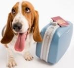 5 tipov pre pohodové cestovanie so psom