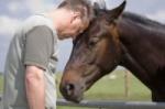 Top 3 kĺbovej výživy pre kone