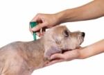Antiparazitiká pre šteňatá