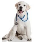 Veterinárne diéty pre psov = krmivo, ktoré lieči