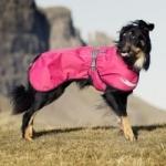 5 najlepších oblečkov pre psa