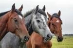 Kĺbová výživa Alavis pre kone