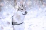 Starostlivosť o psie labky v zime