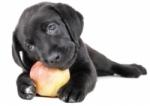 Krmivo a vitamíny pre psov