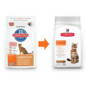Hill's Feline Dry Adult Lamb&Rice 2kg
