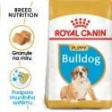 Royal Canin Bulldog Puppy granule pre šteňa buldoga 12kg
