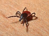 Stop parazitom: veľký sprievodca antiparazitikami