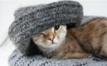 Brit Premium Cat: nové mačacie kapsičky