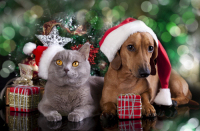 Vianočné darčeky pre maznáčikov