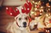 Ako si s miláčikom užiť pokojné Vianoce a silvestra?