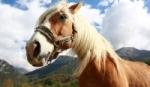 Novinky v kĺbových výživách pre kone