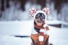 Oblečky pre psov: ako správne vybrať?