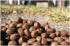 Calibra s jahňacinou a ryžou pre maškrtné jazýčky