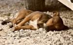 Pes v lete: prehriatie a čo robiť