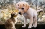 Nové trendy vo výžive psov a mačiek