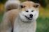 13 filmov o psoch, ktoré musíte vidieť
