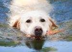 So psom pri vode