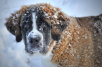 Ako sa starať o psov v zime?