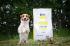Testovanie Brit Care Mini: malí psíci hodnotia